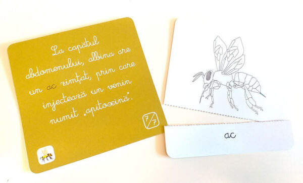 Lecții Montessori – Carduri Animale Zoologie – Nevertebrate – Colectia Tiki-Tan – Smart Games