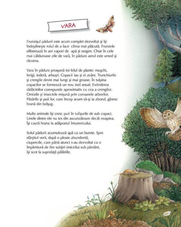 Vino cu noi prin pădure! Animalele și plantele de-a lungul anului – Susanne Riha – Univers Enciclopedic